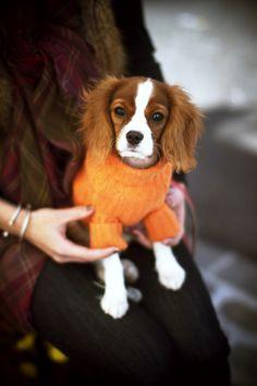 cavalier sweater