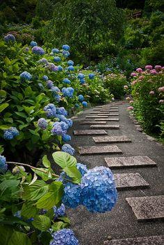 hydrangea path