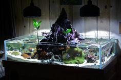volcano fish tank!