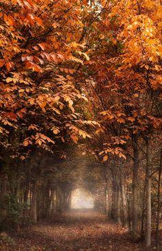 photography portfolio, autumn tree, seasons autumn, fall scene, blue skies, path, forest, fall weddings, place