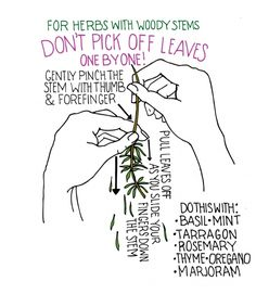 Helpful Tip:  How to remove herbs with woody stems, featured on SeasonWithSpice.com