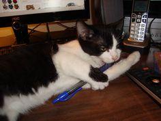 He decided he likes pens.