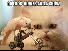bird, animal pics, funny animals, cat quotes, funny pictures, funny cats, funni, dinners, friend