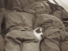 Russian soldiers sleeping with a puppy in Prague during World War 2