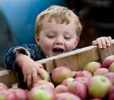 Quiz: How 'Bout Them Apples? | Reader's Digest