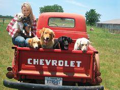 anim, mirandalambert, dogs, truck, blake shelton