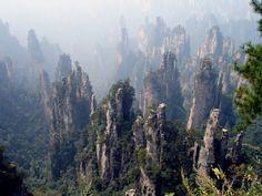 rock forrest, rock forestwow