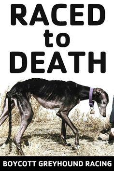 Stop the Cruelty