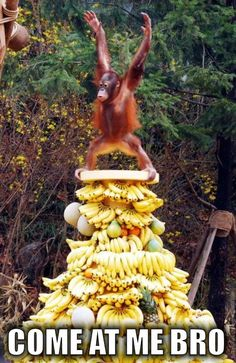 Don't tangle with that mountain of bananas.