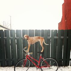 'Maddie the Coonhound' is a photo series by Atlanta-based photographer Theron Humphrey
