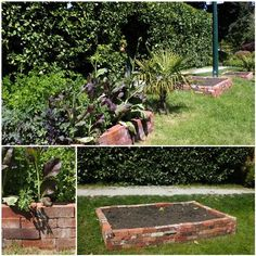 Turning Lawn into a Vegetable Garden with Raised Beds. Use Recycled Bricks. OMG, I have a ton of extra bricks...score!!