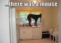 There Was A Mouse