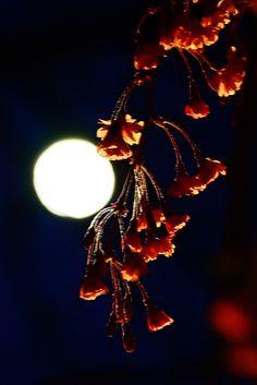 paschal moon.