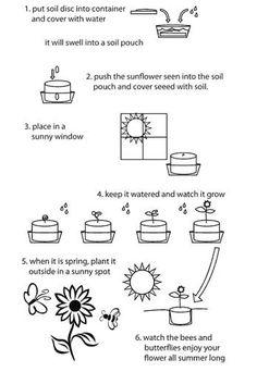 Grow Sunflowers :5 fun activities | Gardening