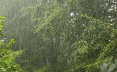 oregon rain, favorit place, raini weather, raini pdx, natur, forest