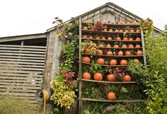 Feeling Fall on The BULLETIN at Terrain #pumpkins