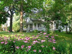 Purple coneflowers and a dreamy farmhouse.