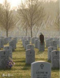 eagle on tombstone, eagle pic, bald eagles