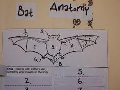 Bat Lapbook