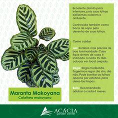 Marantha Makoyana #plants #plantas