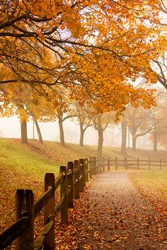 Fall in Schenley Park.