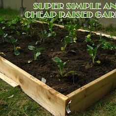 My favorite raised bed idea so far is actually from Sam and Sheri's back yard. They laid down some weed-blocking fabric and then put the raised beds on top of that! Their garden did fabulously.