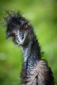 **Stylish Emu. I am beautiful no matter what you say! by Justin Lo