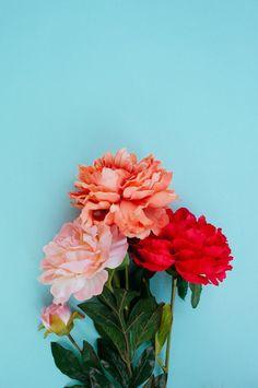 Flowers on aqua.
