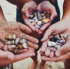 treasur, sea, beach, shell seeker, collect shell