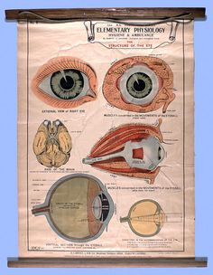 Wall chart depicting physiology of the human eye, circa 1940. Chart used in nursing education at Ararat and Lakeside Psychiatric Institutions, Victoria, Australia - Museum Victoria.