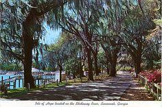 Bluff Drive, Isle of Hope, GA
