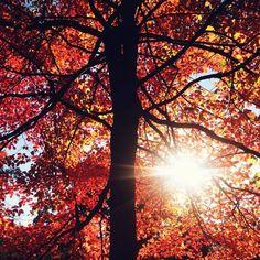 By Kendra Canty. #fallfoliage #centralpark fallfoliag centralpark