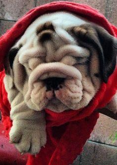 Wrinkles!