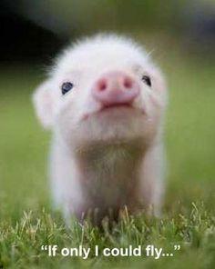 how. freaking. cute. #baby #animal