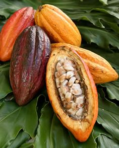 Cacao beans in their pods