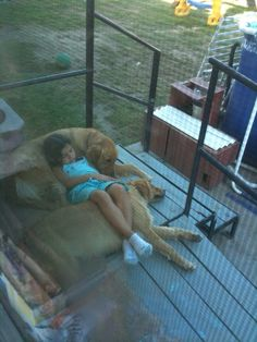 Someone's adorable golden retrievers relaxing with their sweet girl