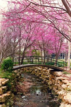 The beautiful Fort Worth Botanic Gardens, great place to get some Ft. Worth wedding pictures.