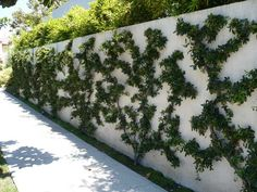 An attractive way to spruce up a boring wall.