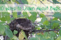 10 Ways to Learn About Birds ~ Creative Family Fun ~ 10 fun hands-on activities to help your kids learn about birds