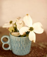 dogwood blooms remind me of my deedaw! I miss him everyday!! <3