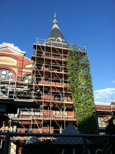 Janet & the Beanstalk: a true Jack & the Beanstalk tale right in our very own garden! read more about the vine that reached the top of the Arts & Industries building on our blog.