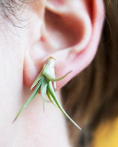green air, airplant, live plant, plants, plant earring, inspir, jewelri, air plant, earrings