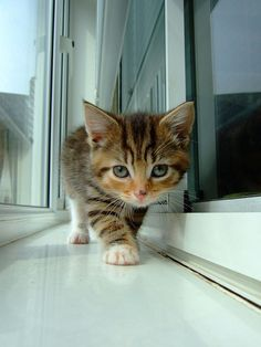 Adorable little kitty walking towards you.