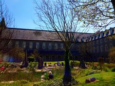 Staff and students enjoying the sun in the Bicentenary Garden on the south campus of NUIM.