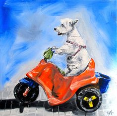Luke westie on a scooter