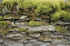 #35  Old, moss cover walls