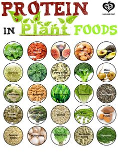 Free Download or Printable: Protein in Plant Foods