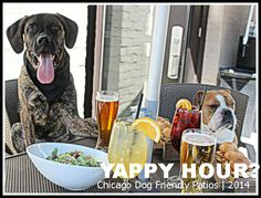 Dog Friendly Day Trips From Chicago