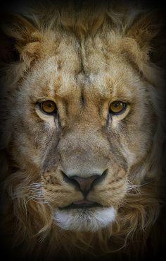 ~~ Beautiful King ... ~~