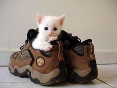 Little kitten hiding inside a shoe